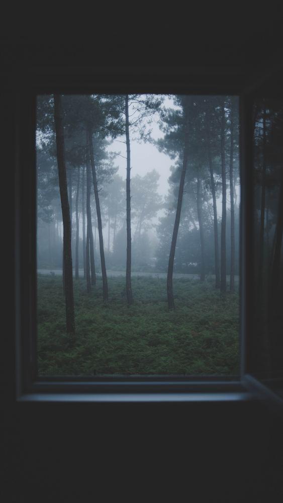Drömmar i dimma